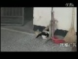 Mother Dog Breast-Feeding Kitten