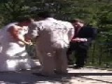 Minister Drops Ring Into Lake During Wedding Reception