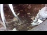 NG Cats POV: Cat Goes Down The Storm Drain