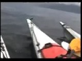 Orcas Swim Under Kayakers