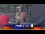 Pit Bull Mauls Owner After Mauling Other Little Pet Dog!