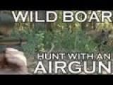 Pig Hunting With .303 British Airgun