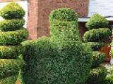 Police Order Gardener To Cut 'offensive' Middle Finger-shaped Bush