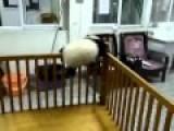 Runaway Baby Panda
