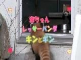 Red Panda Surprise!