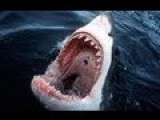 Shark Attacks French Man While On Honeymoon