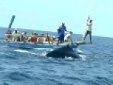 Spear Hunting Sperm Whale With Hand-thrown Harpoon