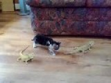 Scared Kitten Goes Crazy!