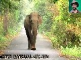 Two Men On Bicycles Get Surprised By Elephant In The Jungle, Abandon Their Bikes And Run Away. Mar 27, 2013