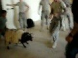 US Marines Clobber Sheep To Death To Amusement Of Native Boy