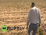 USA: Food Goliath Monsanto Crushes Small Farmer David, Maintain 'seed Oligarchy'