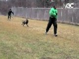 UFC Fighter Jon Bones Jones Vs Attack Dog