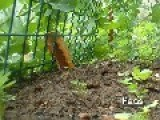 What This? Gardening On LiveLeak!