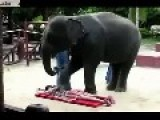 Woman Gets Ass Massage By Big Elephant