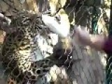 Zoo Feeding Fail