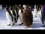 Arca De No&eacute - O Pinguim