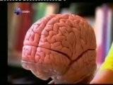 Cerebro Y Fantasmas: Hemisferio Derecho