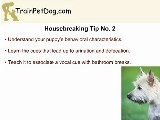 Cairn Terrier Training: Housebreaking A Puppy