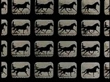 E.J.Muybridge - Horse