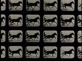 E.J.Muybridge - Horse
