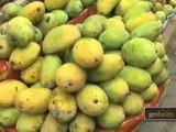 Eating Mangoes In Mumbai, India