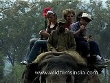 Elephant Ride In Corbett National Park