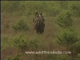 Elephants Ride In Corbett National Park, Uttarakhand