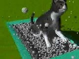 Kitty Litter Physics Animation