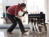 MR. POPPER ET SES PINGOUINS : BANDE-ANNONCE 2 VF Full HD