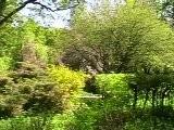 Nachtigall Serenade-Andre Rieu