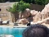 Spectacle Lion De Mer