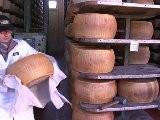 Sikhs In Italien Halten Die Parmesan-Produktion Aufrecht