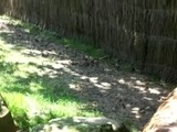 Zoo D&#039 Amn&eacute Ville