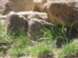 Zoo D&#039 Amn&eacute Ville Montage
