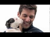 David Gandy And Battersea Dogs & Cats Home