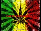 FREESTYLE WEED KALYPSO CAREDAS 2012