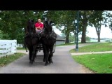 Kentucky Horse Park Friesian 4-Horse Hitch Sept 28, 2011.MP4