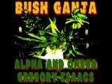 Alpha & Omega- Bush Ganja Dub