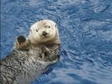 Otters + Summer Updates