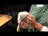 Cute Baby Great Horned Owl Visits Fontenelle Forest Nature Center - Raptor Recovery