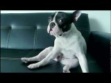 Inside Every Good Dog Is A Great Dog - Purina® Pro Plan® Commercial