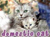 50 Most Amazing Cat Breeds Morphing