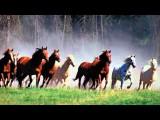 Enya Enywhere Is ❤DO YOU LIKE HORSES MY LOVE❤ ?? I DO