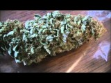 The Weed Nerd Episode 37