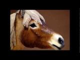 Reconstruction Of The Extinct Yukon Horse