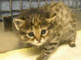 Endangered Cat Born At Audubon