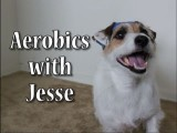 Aerobics With Jesse The Jack Russell Terrier