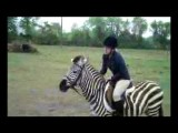 Zack The Zebra Jumping
