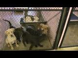 Vlog #25 Życie W USA - Ośrodek Adopcyjny Psów I Kotów W Fort Lauderdale
