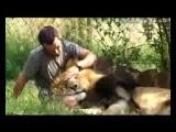Kevin Richardson Lion Man Leões